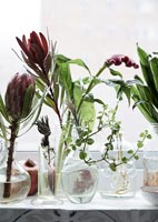Houseplants and cut flowers in glass pots