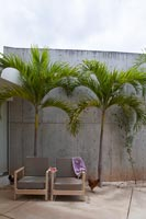 Patio with palm trees