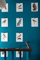 Ornithological prints on stair walls
