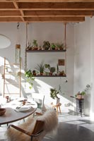 Modern dining room with houseplant display