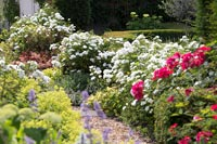 Gravel path through garden borders with Roses and Alchemilla