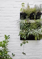 Wall mounted herb container