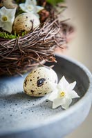 Quails eggs and Narcissus flowers