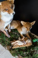 Detail of stuffed foxes in Christmas display