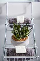Cactus in pot on bath caddy