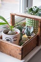 Wooden trug full of small houseplants on windowsill