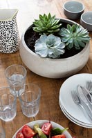 Succulents in ceramic pot on dining table