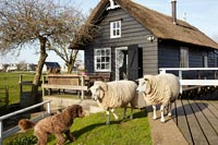 Sheep and a dog outside wooden house with thatched roof