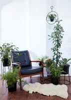 Modern living room with display of houseplants