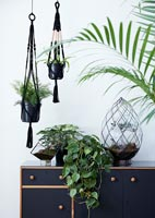Green houseplants in black containers