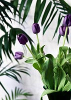 Detail of purple tulips in black vase
