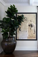 Large houseplant next to artwork