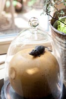 Ornament under glass cloche