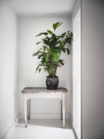 Distressed side table with plant