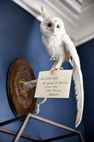 Taxidermy owl above shelves
