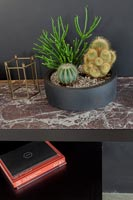 Cacti in black pot on marble side table
