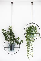 Detail of suspended house plants