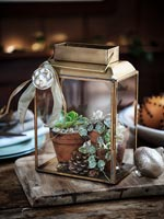 Tiny terrarium decorated for Christmas