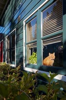 Pet cat seen through window of painted wooden cottage