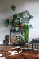 Houseplants on small black metal console table